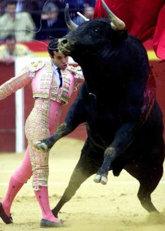 Spanish matador Victor Sanchez Cerda is seen surprising the charging bull with his patented 'side-step rectus-insertus' move at Valencia's Fallas festival.
