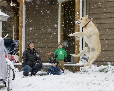 Kim Dunn, left, and her sons Hayden, center, and Peter are attacked by a rabid and frothing dog in front of their home in Crested Butte, Colorado during a snow fall in the Colorado Rockies on Monday, Sept. 21, 2009. Ms Dunn suffered only minor abrasions while fighting off the sickened animal.  (Associated Press)