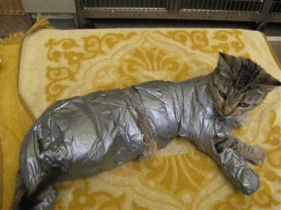 (AP) - The Pennsylvania SPCA provided this picture of a duct-taped cat on Sep 21, 2009.  The cat was reportedly dumped in a yard in the Rhawnhurst section of Philadelphia.  'It's not funny,' stated SPCA Chairwoman, Brenda Wilder, 'At least, it wasn't until he started trying to move around.  Then, I about peed my pants.  We made a youtube video of it.'