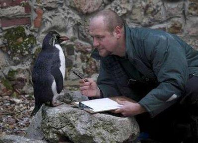 Zoo keeper Tim Savage interrogates a penguin at the London Zoo regarding some missing chewing gum. More than forty penguins are suspects at this point in the investigation, which involves two packs of missing gum from a zookeeper's personal effects and an obscured surveillance camera.  'More than half the wrappers have been recovered within the confines of their habitat already,' Savage disclosed, 'which leads us to believe that there is more than one bird with knowledge of the circumstances.' (REUTERS)