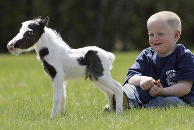 Four-year-old Garrett Mullen watches a pinto stallion named Einstein in Barnstead, New Hampshire. The child suffers from gigantism and is nearly nine feet tall and weighs 1400 pounds. Experts estimate he will grow to nearly twenty feet tall if he makes it to adulthood. (Associated Press)