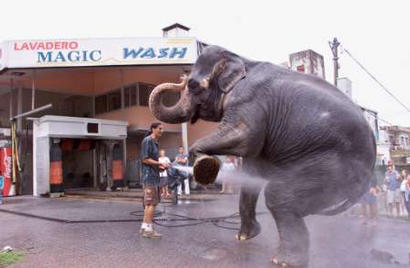 A car wash attendant repels the advance of a raging elephant in Los Angeles by spraying steaming hot water on its genitalia.  The elephant retreated and later attacked an unarmed movie theatre blocks away.