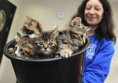Kittens are presented in a bucket to Britain's Camilla, Duchess of Cornwall, during her visit to open the new cattery at the 150 year old Battersea Dogs and Cats Home in London. The CatLady who presented them, Barbara Mastie, was chosen for the honor based on her crappy, curly long hair, broad nose, and lack of make-up that is all too common among women with too many cats and not any men in their lives.  (REUTERS)