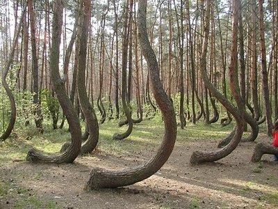 Nike officials have recently revealed that the company has been involved in bioengineering for decades now as they have successfully grown a Nike Swoosh tree.  'If forests everywhere could be filled with trees that looked this, then we could really boost our hiking boot sales without even advertising,' one official stated. (Associated Press)