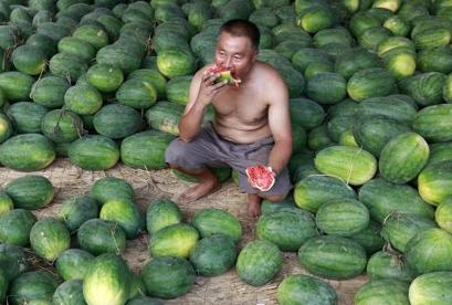 A watermelon thief in China is forced to eat watermelons until his death, according to local laws in the Quazhang province.  'He must eat the watermelons without a shirt on until he dies,' stated a local official, 'as thieves will not be permitted to prosper here.'  (REUTERS)