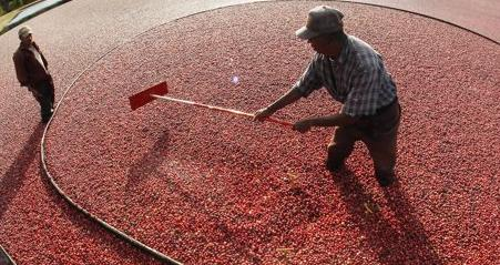 A double amputee cranberry farmer (center) tries to repel a double amputee cranberry thief (left) who is trying to steal his wares. Cranberry theft is on the rise in Massachusetts as economic conditions worsen in the US and the price of cranberries continues to rise. 'Cranberries are the new copper,' one industry analyst stated.  (Associated Press)