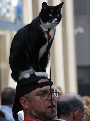 A New York City man reveals his 'Cat IS The Hat' hat during a Dr. Seuss convention at a  Times Square Hotel. The man also had plans to reveal a 'Thing One and Thing Two' display that he claimed he had in his pants, but event officials declined his offer. (Associated Press)