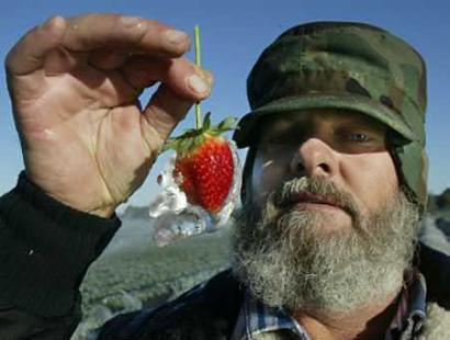 Cuban President Fidel Castro reveals the complexity of his country's agricultural research programs by showing a frozen strawberry grown in frozen soil using frozen pesticides and fertilizers and irrigated only by ice.  The frozen strawberry industry, which generates sales of $18 billion annually in the US, could save millions by eliminating the in-house freezing process.  (Associated Press)
