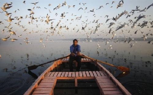 An Indian man rows through migratory birds on the Yamuna river in the old quarters of Delhi in an attempt to set the world record for being struck by bird droppings in a measured one-hour period. (REUTERS)
