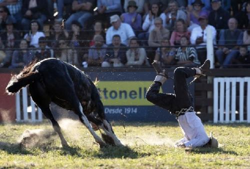 A gaucho falls from a wild horse during the annual Faceplant in Montevideo, March 28, 2013. Throughout Easter Week, 'gauchos', the Latin American equivalent of the North American cowboy, from all over Uruguay and neighboring Argentina and Brazil will visit Montevideo to bury their faces in the dirt in the most tragic and destructive ways. (REUTERS)