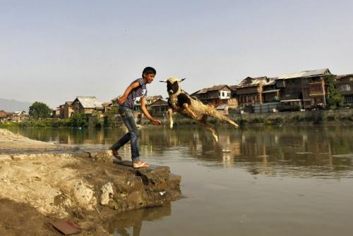 A boy narrowly dodges a flying sheep near the waters of Jhelum river in Srinagar, India. The country has been besieged by flying goats this year more than any in recent times, leading officials to consider worshipping the goats as it already does the cows in order to appease the goat gods or whatever. (REUTERS)