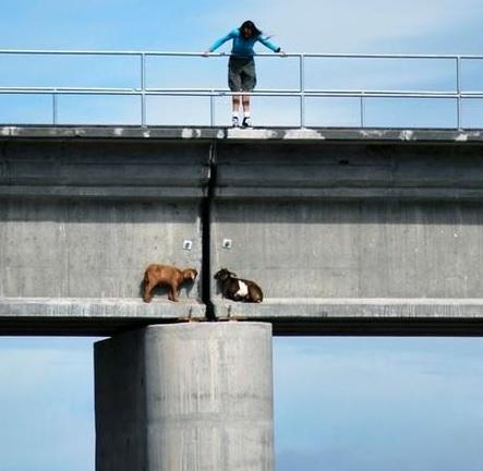 In order to increase tourism in Venezuela, local governments are placing goats in precarious positions on bridges. 'People are intrigued by danger when they can be very close to it, but in no danger themselves,' stated Tegucigulpa's Mayor Ernesto Moncito-Cabrera. He added that they are now seeing 15-20 visitors each day to the bridge and he has already received requests for permits to sell sno-cones and funnel cakes at each end of the bridge. (REUTERS)