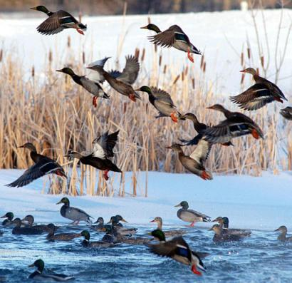In Grand Isle, Vermont, an AP photographer was found to be so bored he took photos of ducks and submitted them as real news photos.  It was reported he was ecstatic about actually catching a few of them in mid-air on film.