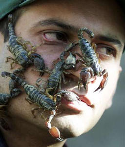 Drug abuse has become so prevalent in Argentina over the years that it has become an epidemic.  Here, a young man living on the streets awakens oblivious to the many scorpions that stayed warm on his face through the night. (Associated Press)